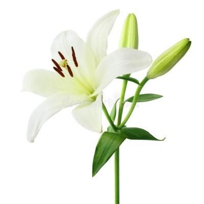 Лилии высший сорт