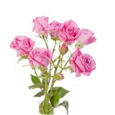 Кустовая роза разные цвета