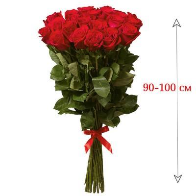 Роза метровая